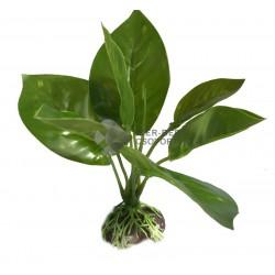 Műnövény 15cm - 5807 'M'